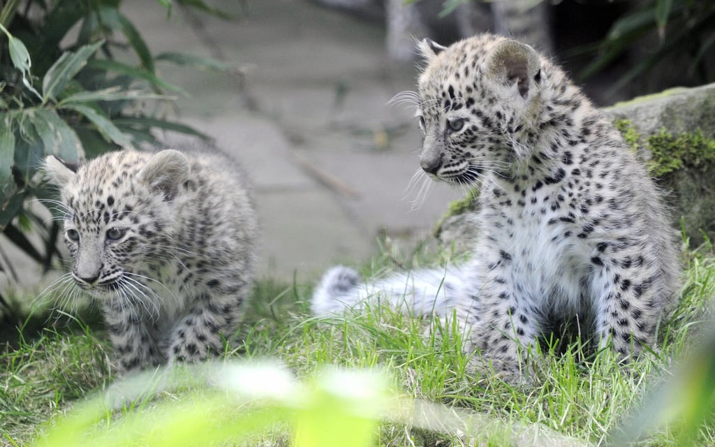 Saia and Her Two Newborns!