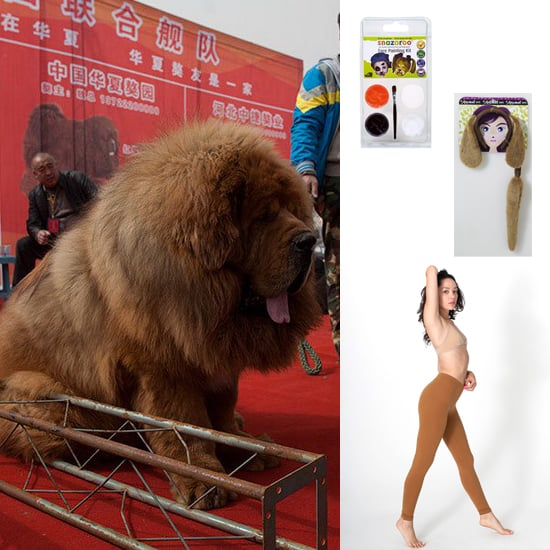 A Chinese Zoo Disguises a Dog as a Lion