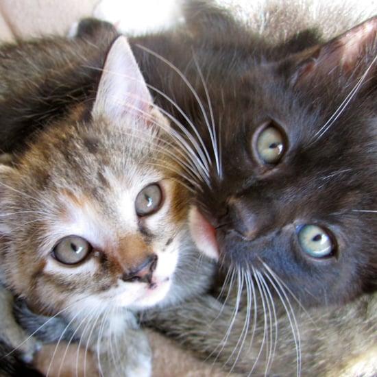 Students Give Teacher Kittens
