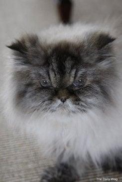 Martha Stewart's 19-Year-Old Cat, Mozart, Died