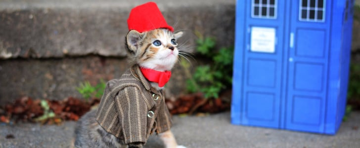 19 Paws-itively Perfect Cat Costumes