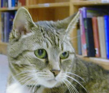 Does Your Local Bookstore or Library Have a Resident Cat?