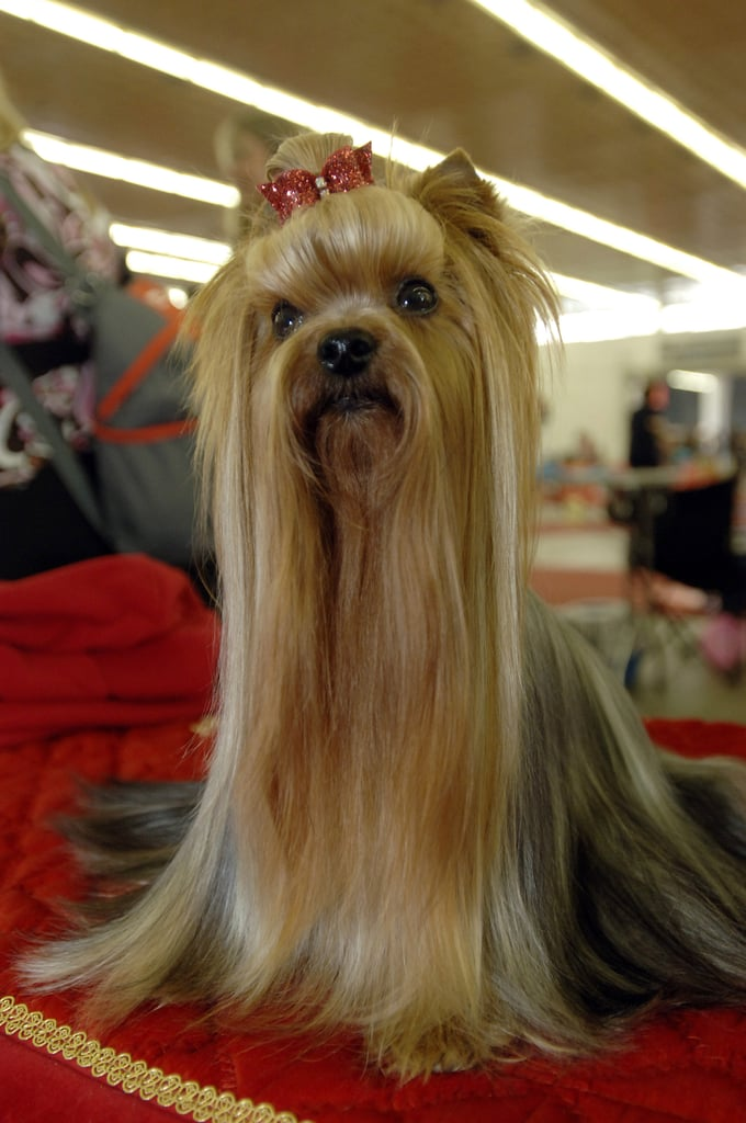 """The """"Are Those Extensions?"""" 'Do"""