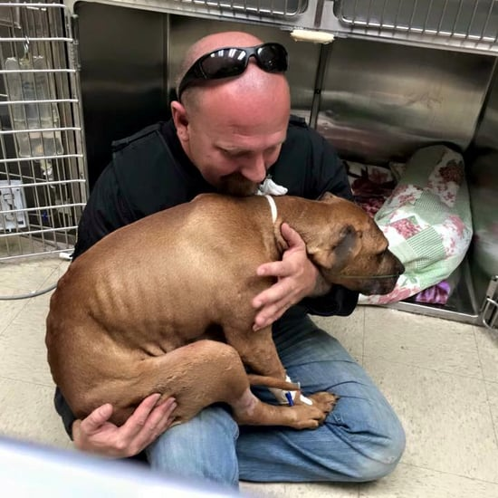 Pit Bull Rescued From Fighting Life