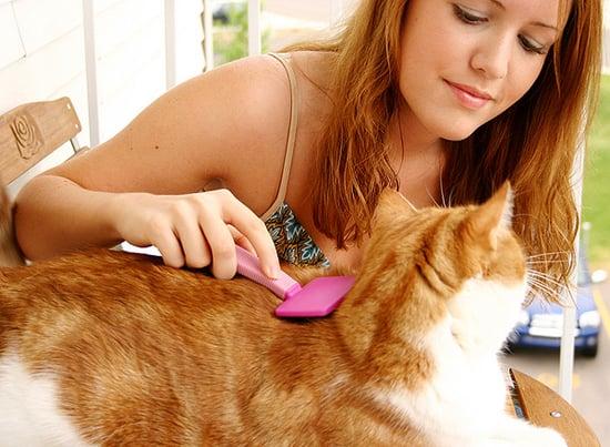 Let's Talk: Should You Tip Your Cat Sitter or Groomer?