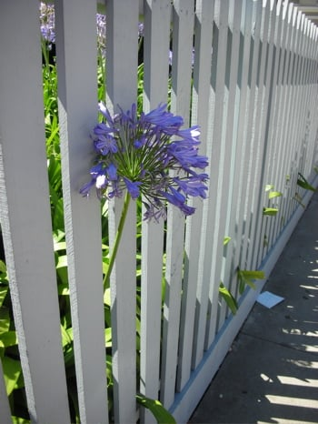 Do You Have a White Picket Fence?