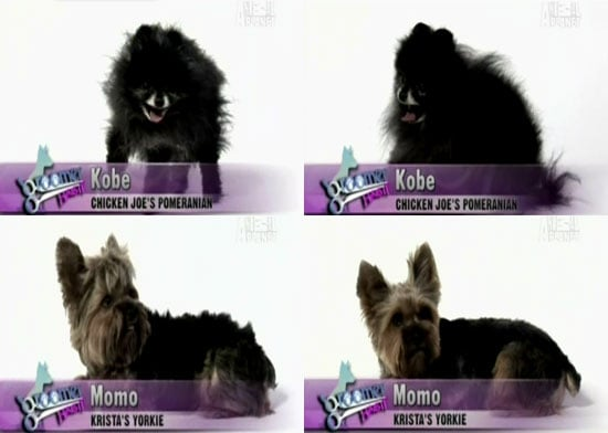 Groomer Has It, Episode Two: Did You Agree?