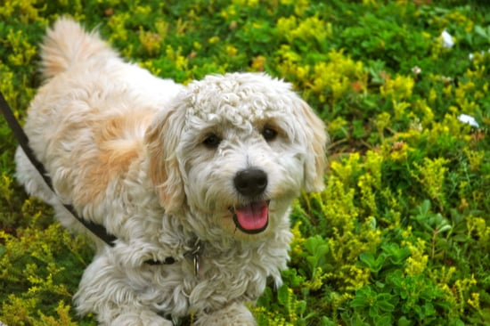 47 Hypoallergenic Dog and Cat Breeds