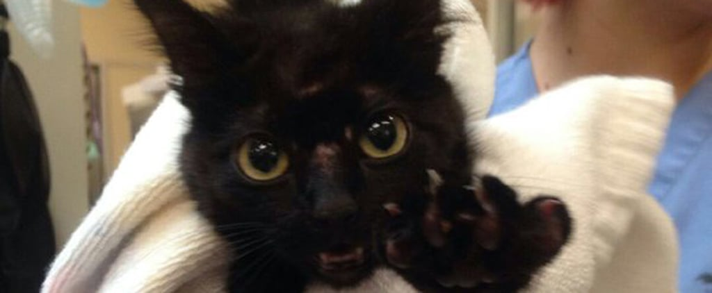 San Jose Sharks' Ice-Rink Kitty Finds Loving Home