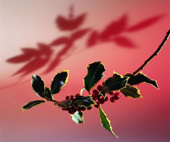 Ten Tips 'Til the Holiday: Hanging Plants
