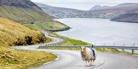 Faroe Islands Enlist Sheep To Create Their Own 360-Degree Street Views