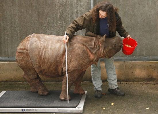 Photos of a Baby Rhino