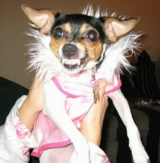 Dog Dressed Up in Pink and Heels