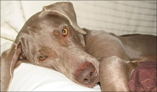 What's Your Take: Did Heather Mills Kill a Dog?