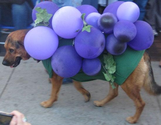 Homemade Howl-oween: A Grape Costume Idea!