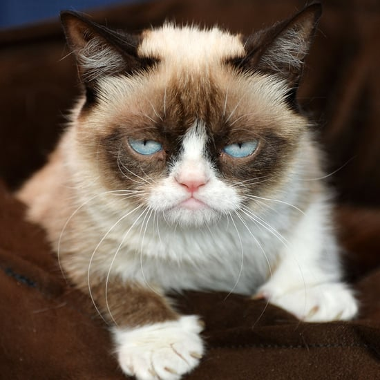 Grumpy Cat Releases Second Book