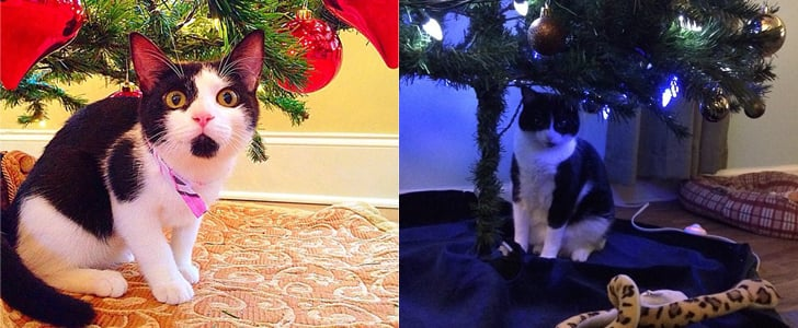 The Best Furry Presents Underneath (or in!) the Christmas Tree