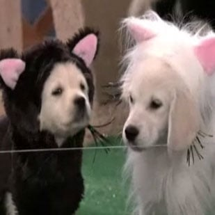 Puppies Dressed As the-Animal-Who-Shall-Not-Be-Named