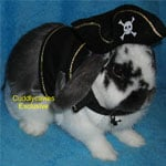 Are Your Ready For the Halloween Bunny?