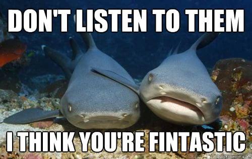 Friendly Shark Is Friendly