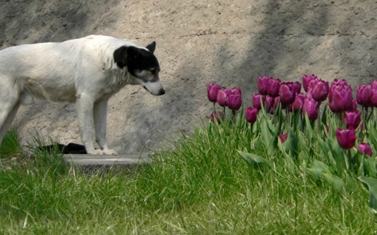 Composting Is Dangerous For Pets
