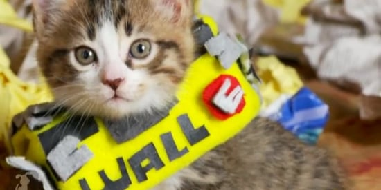'Wall-E' Gets A Cute Overload With Stuffed Animals And A Kitten