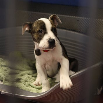 Things to Buy or Donate For Animal Shelter Staff Members
