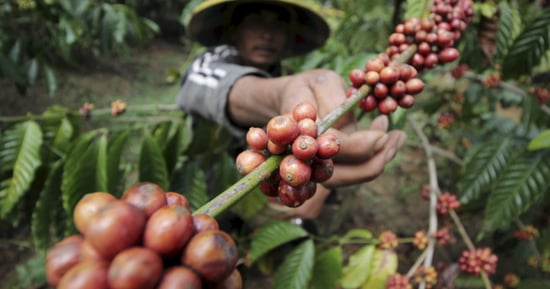Our Coffee Addiction Could Destroy Earth's Tropical Forests