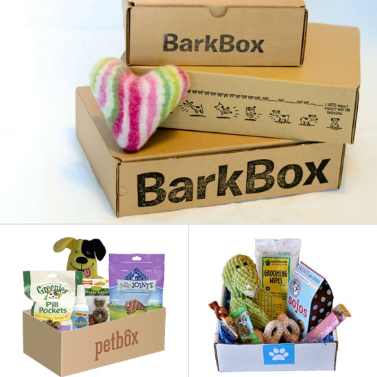 5 Monthly Subscription Boxes Made Just For Pets