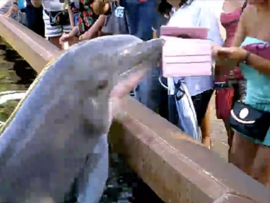 Dolphins Don't Like People Who Use iPads as Cameras Either