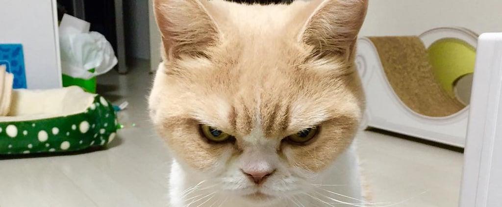 This Japanese Grumpy Cat Will Be Your New Spirit Animal