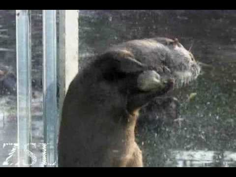 Super Cute Video: Otters Can Juggle, Too!