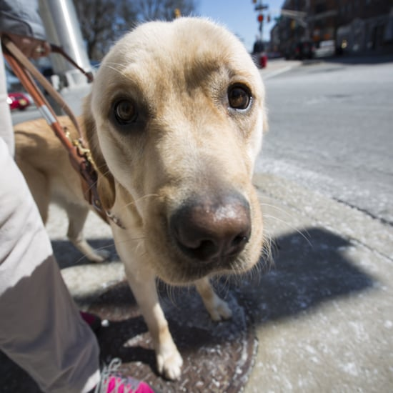Seeing-Eye-Dog School Photos