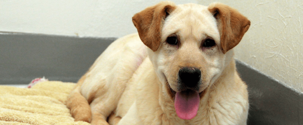 The Story of This Dog Rescued From a Meat Farm Will Absolutely Stun You