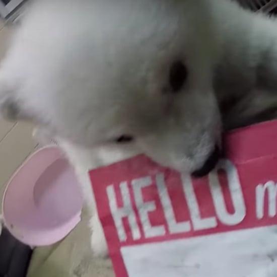Polar Bear Baby at Columbus Zoo | Video