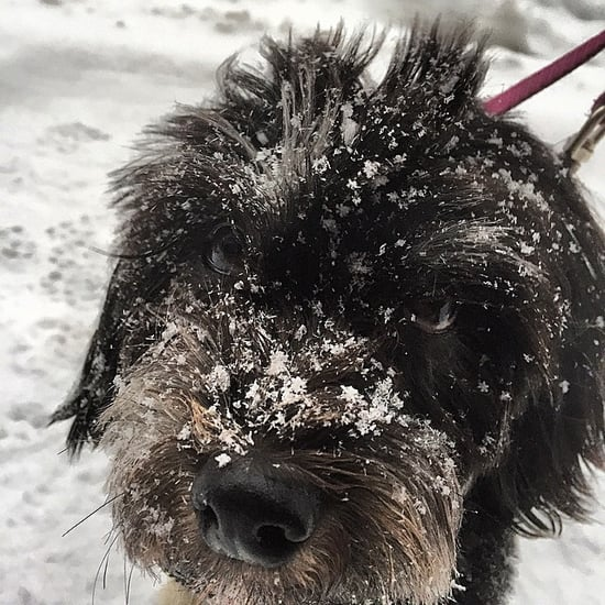Dogs Playing in the Snow During Snowmageddon 2015