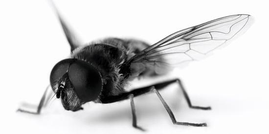 18 Nontoxic Ways To Keep Pests At Bay This Summer