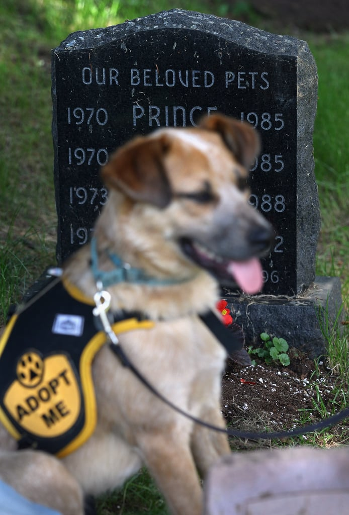 Brownie attended the war dog memorial service.