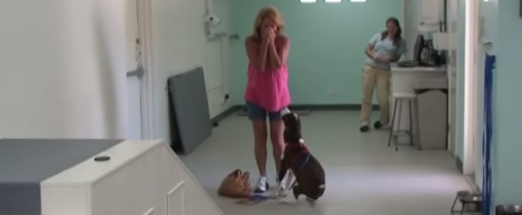 Paralyzed Dog Shocks His Owner When He Walks Again After Surgery