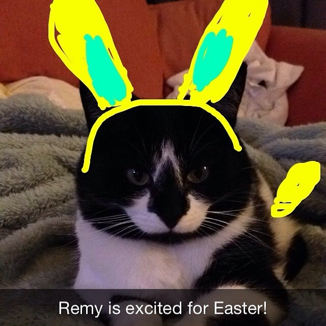 Easter cat > Easter.  Source: Instagram user snapcatremy