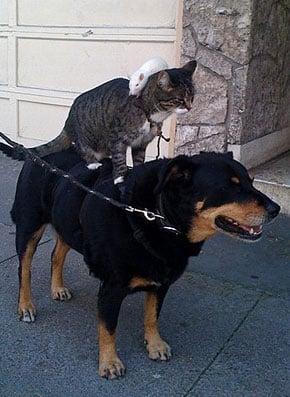 Sugar Shout Out: OMG! It's a rat on a cat on a dog!