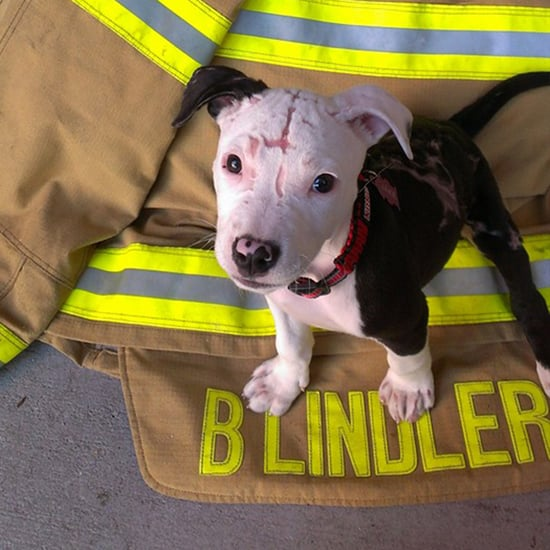 Firefighter Rescues Puppy From Burning Building, Raises Him as His Own