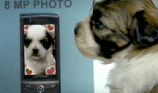 38 Cute Animals Show Us Eight Ways to Use One Cell Phone!