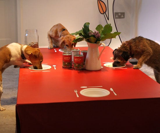 Lily's Kitchen Dog Dinner in London England For Dogs Trust