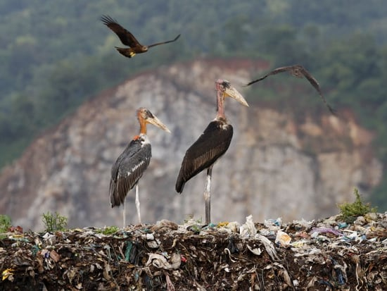 All-Woman 'Army' Bands Together to Protect Endangered Stork in India