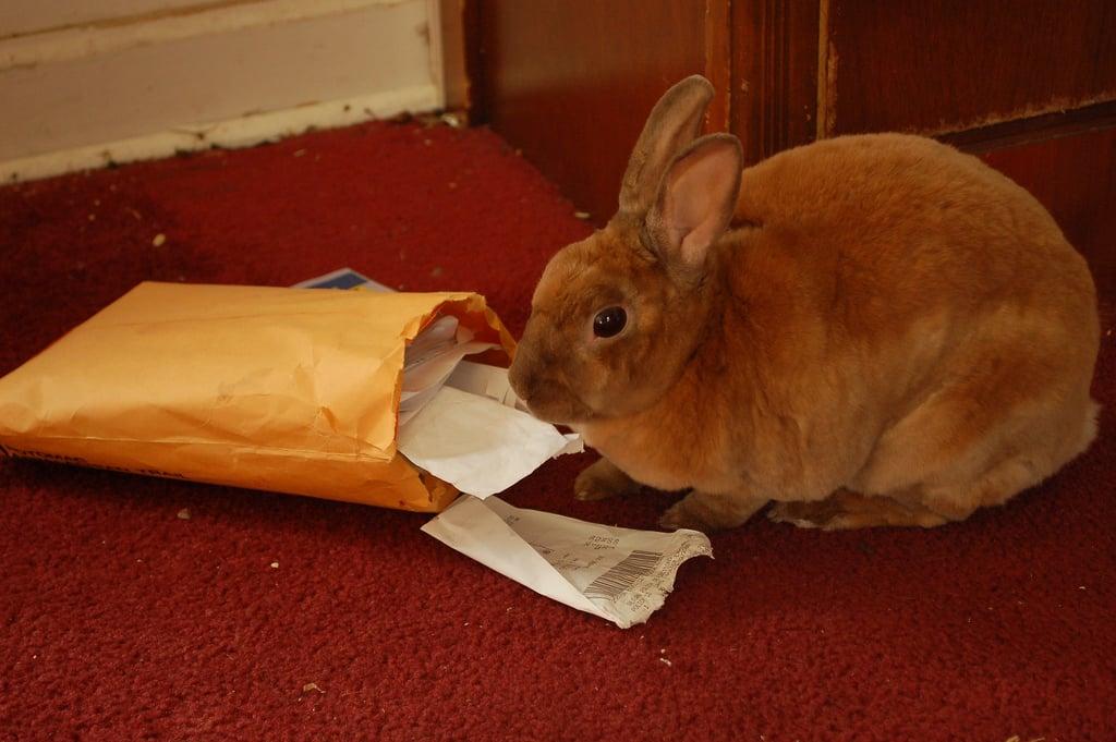Yum, Mail