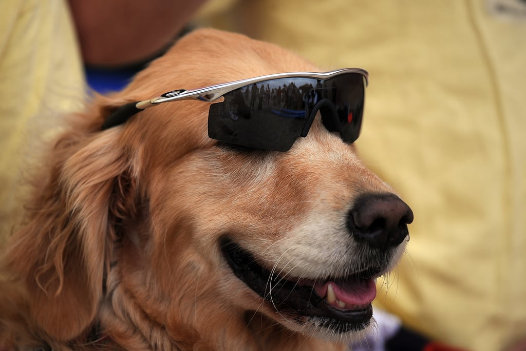 Gotta Have the Doggles