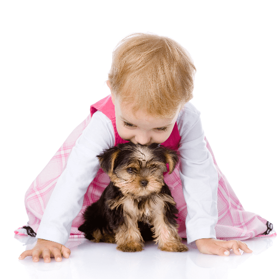Why Dogs Make the Perfect Babysitters   Video