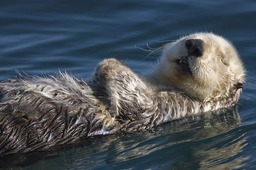 You Otter Talk to Your Salon About This