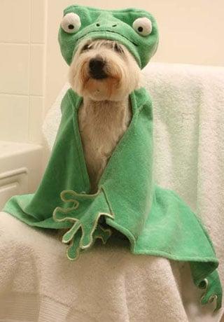 Barnyard Friends Hooded Towels: Spoiled Sweet or Spoiled Rotten?